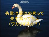 【太鼓の達人】 白鳥の湖 ~still a duckling~ 歌詞・音源 配布付き