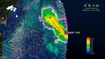 NHKスペシャル「被曝(ひばく)の森~原発事故 5年目の記録~」