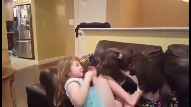 Pit Bull shares giggly smooch session with little girl