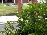 cabalgata en abasolo tamps 15 septiembre 2012