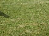 jeux entre chiens, Chiens évasion.com