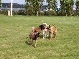 jeu de chien, Chiens évasion