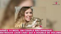 Après 14 mois, un couple britannique retrouve leur chat qui a doublé de volume ! Les images dans la minute chat #156