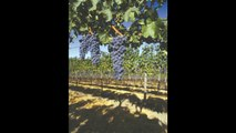 Vina Robles Winery, Paso Robles - wine tasting, weddings, special occasions, corporate events