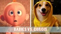 BABIES VS. CORGIS: WHO IS FUNNIEST?