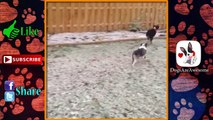 Dogs Discovering Snow #29 ⛄ | Dogs in Snow | Funny Dogs | Dogs playing in Snow | Dog Snow