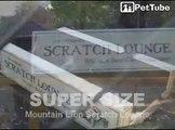 Mountain Lion on a Cat Scratcher - Scratch Lounge