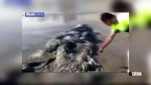 Insolite : Une créature étrange échouée sur une plage mexicaine