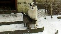 Милая котейка и застенчивый пес... =))  (Cute cat and shy dog)