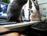 Ces félins jouant à «3 petits chats »