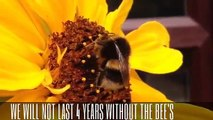 BEES ARE DYING IN THEIR MILLIONS WORLDWIDE