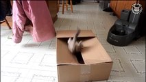 Cats in Boxes || Cats VS Boxes Funny Pet Compilation (Funny)