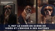 Le dogsitter met le chien en scène pour envoyer des nouvelles à ses maîtres