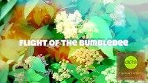 """Flight of the Bumblebee, Ultra Short (Сверх короткометражный фильм """"Полет шмеля"""") [2016]"""