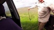 Un serpent planqué dans la voiture. Flippant