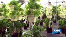 SNN: NASA and Local Scientists Explore Hydroponics Farming