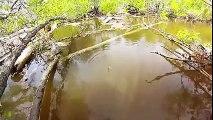 At-Çek balık avı