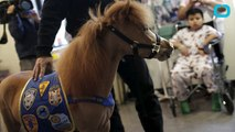 Miniature Horses Bring Smiles To Young Patients In A New York Hospital