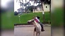 Cet homme en état débriété essaye de monter à cheval