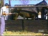 Jackass - Horse Kick