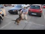 Perro se reencuentra con su dueño que ha estado ocho meses en Afganistan | Dog reunites with his owner has been eight months in Afghanistan