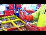 Incredible Fish Market of Busan, South Korea