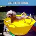Des chiens qui détestent les bains - Compilation d'animaux adorable