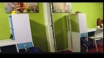 Gatos divertidos vídeo divertido gato JUNIO 2014- Funny cats video funny cat