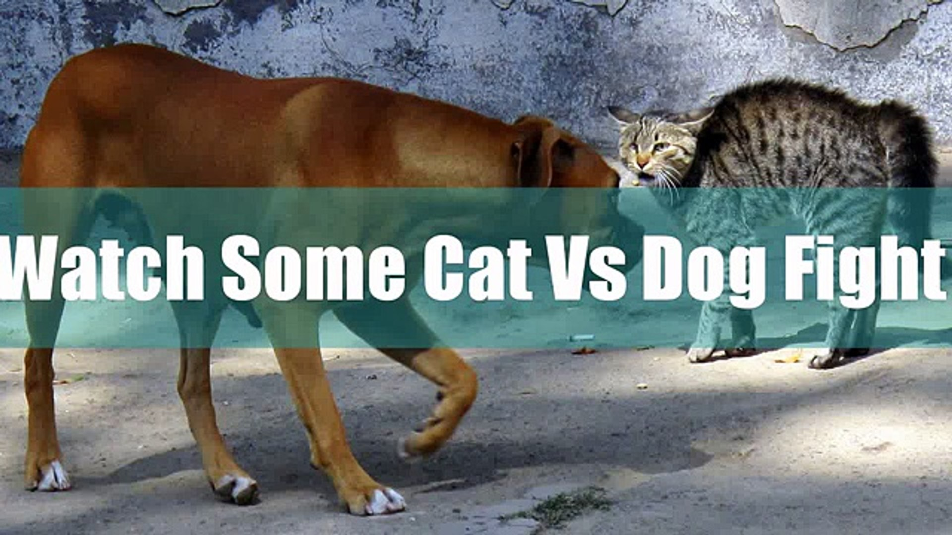 Best Cat Vs Dog FIGHT Video EPIC Fighting Videos top songs 2016 best songs new songs upcoming songs