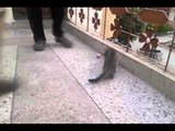 Cute Little Cats are having fun-Must Watch-Top Funny Videos-Top Prank Videos-Top Vines Videos-Viral Video-Funny Fails