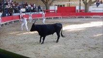 MANDUEL-Abrivado longue-course camarguaise-bandido-Fête Votive-Aout 2015-gardians-chevaux-taureaux
