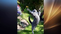 Funny Animals Photos 2016 | Funny Photos Taken At The Right Moment