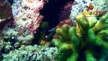 DSM Dive -- Plongée Lombok -- Diving Lombok & Gili -- Frogfish Point