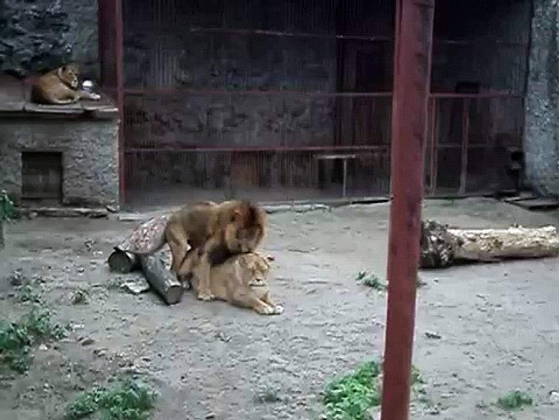 Love animals - funny video animals