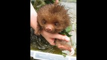 25 Hilarious Animals Taking Baths