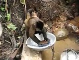 Funny And Amezing Video a worker monkey Very Funny And Amezing