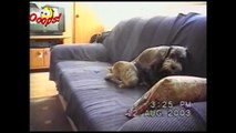 Funny Animals - Funny Dogs & Cats  - Animal Attacks
