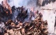 Reses robadas eran faenadas en un camal clandestino en Cotopaxi