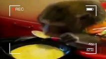 Funny Animal Video Clips Fail Compilation 2015  Funny Videos Compilation  10mins FUN