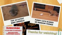 Cats and dogs falling asleep while standing up Funny animal compilation