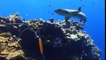 Dans la peau dun prédateur : Oceans Documentaire Animalier