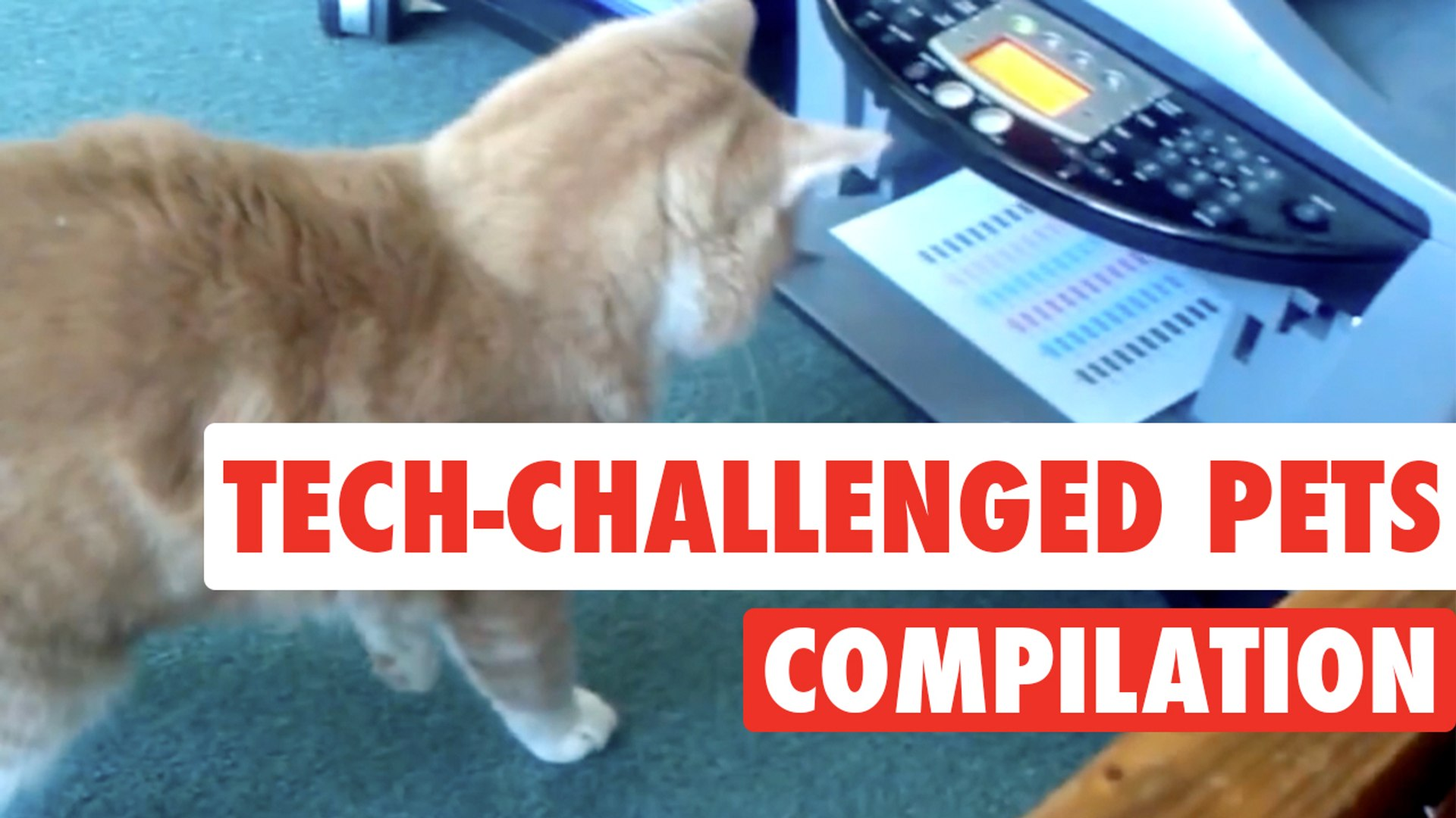 Tech-Challenged Pets || Pets vs Technology Funny Compilation