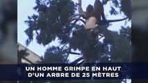 Un homme grimpe en haut d'un arbre de 25 mètres à Seattle