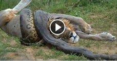 The Snake Eating A Girl Alive - video dailymotion