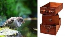 City birds are smarter than rural birds