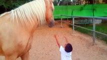 Haut comme trois pommes, Ce garçon veut enlacer la jambe du cheval… La suite va vous laisser sans voix !