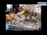 Funny Animal Videos Comedy Monkey Videos | Animals | Dog | Pets