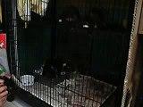 Lamma Animal Welfare Centre