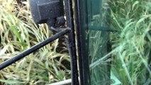 Mais Hakselen 2010 : Loonbedrijf Snijders/Cerfontaine in Hoogcruts,ritje met Claas Jaguar
