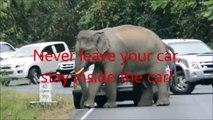 Thaïlande : quand des éléphants mécontents s'en prennent aux voitures